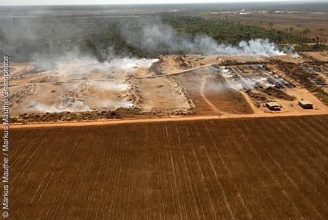 Brandrodung für den Sojaanbau
